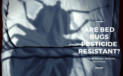 Bed Bugs, Biology and Pesticide Resistance