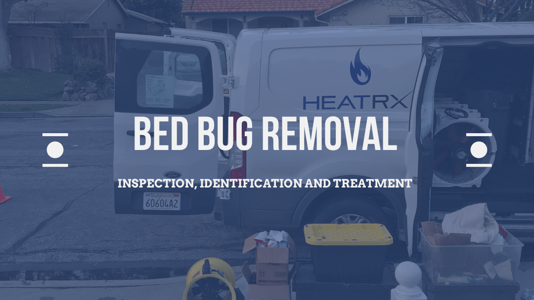 Bed Bug Removal – Inspection, Identification & Treatment