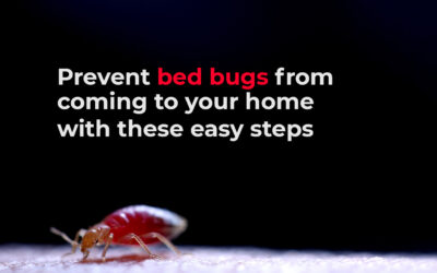 How to Prevent Bed Bugs From Coming To Your Home