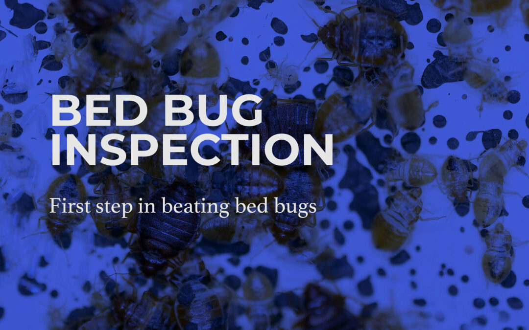 Bed Bug Inspection: The First Step