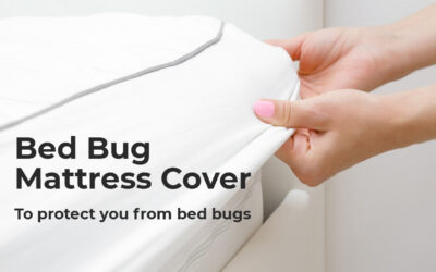Bed Bug Mattress Cover To Keep You Protected